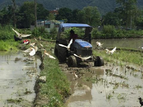 Mit dem Traktor mitten durch die Reisfelder