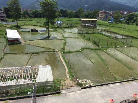 Sicht auf den ganzen Garten vor dem Studentenheim